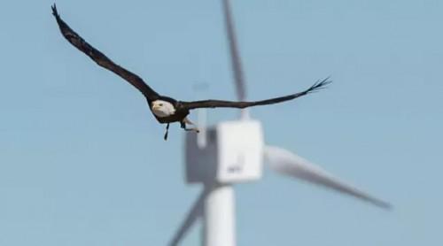 风电特许权