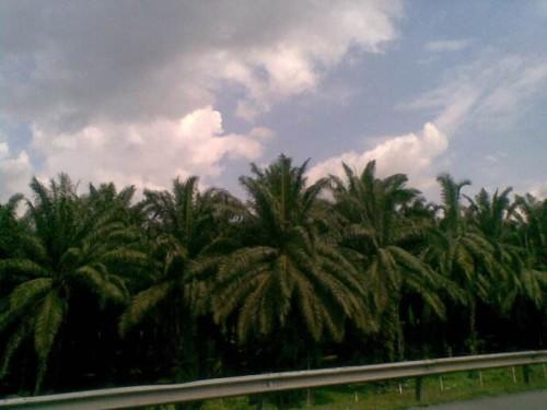 马来西亚农民抗议欧盟禁用生物燃料中的棕榈油