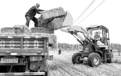 河北小麦秸秆变宝