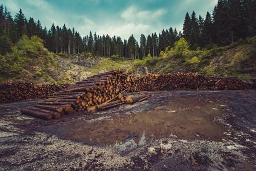 挪威成为世界上第一个实现森林零砍伐的国家