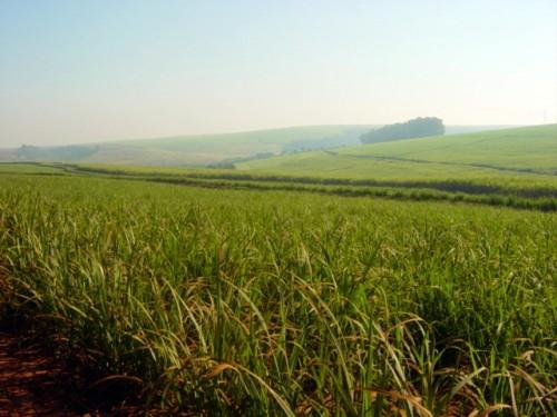 2018年1-8月巴西的生物质发电比去年增长了11%