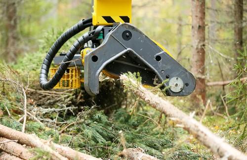 森林和林业部门应在减缓和适应气候变化方面发挥积极作用