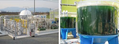 日本海藻养殖场获得可持续认证 产品可生产生物燃料