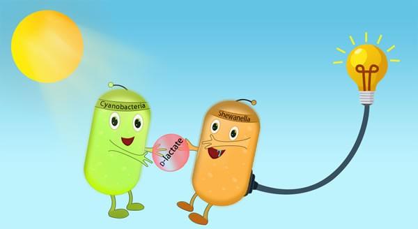 微生物所创建出新一代生物光伏系统