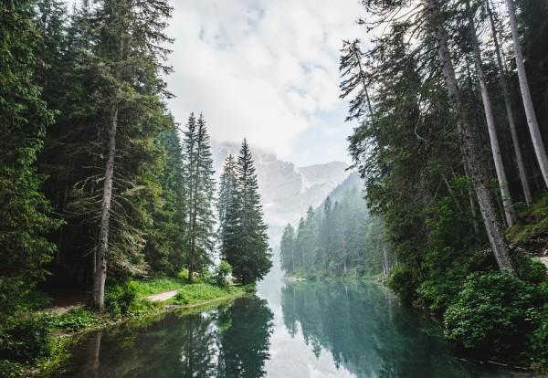 科學清楚的證實了可再生木材能源是對抗氣候變化的關鍵工具