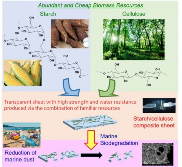 科学家开发基于植物的新型塑料 在海洋中具有很高的生物降解性