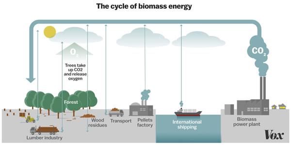 欧洲大规模的生物质能利用是否加剧了气候危机?