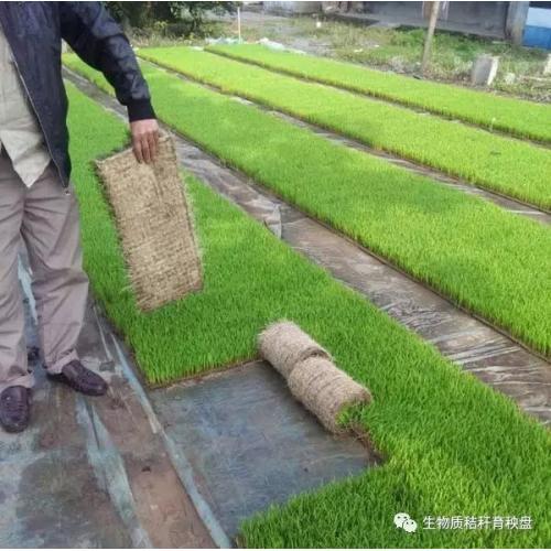 生物质秸秆沼渣营养育秧盘生产设备