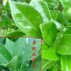 农用有机硅表面活性剂