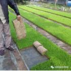 生物質秸稈沼渣營養育秧盤生產設備